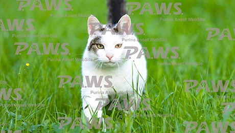 Cat walking through grass