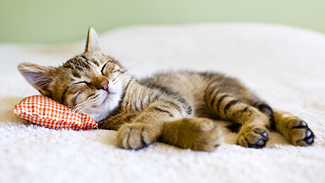 Kitten asleep on pillow